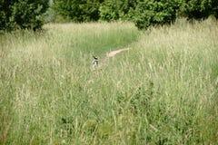 Νέο τρέξιμο σκυλιών Στοκ φωτογραφία με δικαίωμα ελεύθερης χρήσης