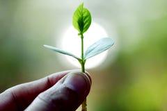 Νέο φυτό στα χέρια Στοκ εικόνες με δικαίωμα ελεύθερης χρήσης