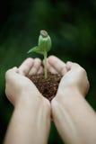 Νέο φυτό στα χέρια Στοκ Εικόνες