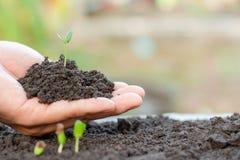 Νέο φυτό στη διάθεση Το σπορόφυτο αυξάνεται στοκ εικόνες