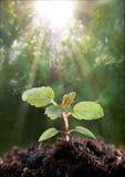 νέο φυτό Στοκ εικόνα με δικαίωμα ελεύθερης χρήσης