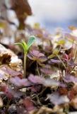 νέο φυτό Στοκ φωτογραφία με δικαίωμα ελεύθερης χρήσης
