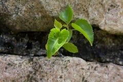νέο φυτό Στοκ Φωτογραφία