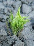 νέο φυτό Στοκ Εικόνα