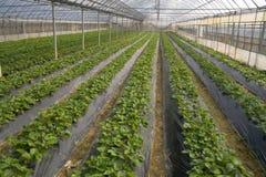 νέο φυτό Στοκ Εικόνες