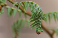 Νέο φύλλο φτερών δέντρων Στοκ φωτογραφίες με δικαίωμα ελεύθερης χρήσης