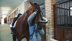 Νέο χαλινάρι σκλήρυνσης γυναικών στο άλογο απόθεμα βίντεο
