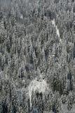 νέο χιόνι δασών κωνοφόρων Στοκ Εικόνες