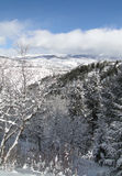 Νέο χιόνι στα γυμνά χειμερινά δέντρα Στοκ Εικόνες