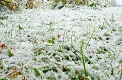 Νέο χιόνι στη χλόη και εγκαταστάσεις στα τέλη του φθινοπώρου Στοκ Εικόνες