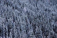 νέο χιόνι Στοκ Φωτογραφίες
