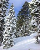 νέο χιόνι Στοκ εικόνα με δικαίωμα ελεύθερης χρήσης