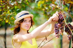 Νέο όμορφο κορίτσι που επιλέγει το ώριμο σταφύλι στην ηλιόλουστη ημέρα στην Ιταλία Στοκ Εικόνα