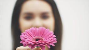 Νέο όμορφο κορίτσι που στέκεται σε ένα άσπρο υπόβαθρο Κατά τη διάρκεια αυτού αύξησε το λουλούδι με τα χέρια του Ρόδινο λουλούδι απόθεμα βίντεο