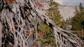 Νέο όμορφο κορίτσι τουριστών με το σακίδιο πλάτης και κάμερα που χαμογελά στη κάμερα πεζοπορί στη λίμνη πάρκων Yosemite σε αργή κ φιλμ μικρού μήκους