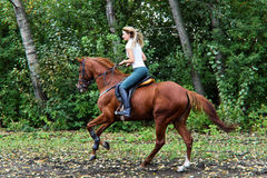 Νέο όμορφο κορίτσι χωρών με το άλογο Στοκ Φωτογραφία