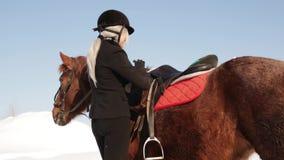 Νέο όμορφο jockey κοριτσιών που φροντίζει για ένα άλογο το χειμώνα απόθεμα βίντεο