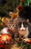 νέο δέντρο γατακιών κάτω από το έτος Στοκ Εικόνες