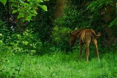 Νέο foal στην πράσινη φύση Στοκ εικόνα με δικαίωμα ελεύθερης χρήσης