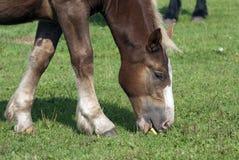 Νέο foal Στοκ φωτογραφίες με δικαίωμα ελεύθερης χρήσης