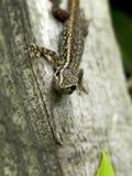 Νέο Gecko 2 στοκ φωτογραφίες