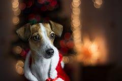 νέο s έτος σκυλιών Στοκ Φωτογραφία