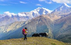 Νέο trekker που εξετάζει το βουνό χιονιού στοκ εικόνα με δικαίωμα ελεύθερης χρήσης