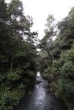 νέο whangarei Ζηλανδία πτώσεων στοκ φωτογραφία με δικαίωμα ελεύθερης χρήσης