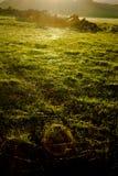Νήματα αραχνών στον τομέα στο ηλιοβασίλεμα Στοκ φωτογραφία με δικαίωμα ελεύθερης χρήσης