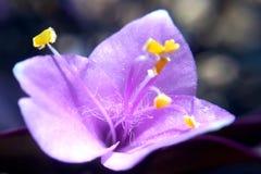 Νήματα του λουλουδιού Στοκ εικόνα με δικαίωμα ελεύθερης χρήσης