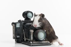 Νίκαια λίγη χάμστερ με το αναδρομικό photocamera Στοκ φωτογραφία με δικαίωμα ελεύθερης χρήσης