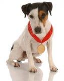 νίκη σκυλιών βραβείων Στοκ Φωτογραφία