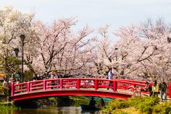ΝΑΓΚΑΝΟ, ΙΑΠΩΝΙΑ - 19 Απριλίου 2019: Όμορφο άνθος κερασιών, sakura του χρόνου πάρκων Garyu την άνοιξη, νομαρχιακό διαμέρισμα του  στοκ εικόνες με δικαίωμα ελεύθερης χρήσης