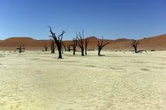 Ναμίμπια Deadvlei Στοκ Φωτογραφίες