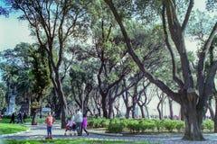 ΝΑΠΟΛΗ, ΙΤΑΛΙΑ, 1995 - τα μνημειακά δέντρα της βίλας Comunale στη Νάπολη προσφ στοκ φωτογραφίες