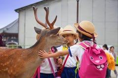 ΝΑΡΑ, ΙΑΠΩΝΙΑ 25 ΜΑΐΟΥ 2016: Τουρίστες και άγρια ελάφια στο Νάρα στις 25 Μαΐου 2016 Τα ελάφια στο Νάρα έχουν θεωρηθεί ως θεϊκά ζώ Στοκ φωτογραφία με δικαίωμα ελεύθερης χρήσης