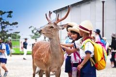 ΝΑΡΑ, ΙΑΠΩΝΙΑ 25 ΜΑΐΟΥ 2016: Τουρίστες και άγρια ελάφια στο Νάρα στις 25 Μαΐου 2016 Τα ελάφια στο Νάρα έχουν θεωρηθεί ως θεϊκά ζώ Στοκ Φωτογραφίες