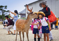 ΝΑΡΑ, ΙΑΠΩΝΙΑ 25 ΜΑΐΟΥ 2016: Τουρίστες και άγρια ελάφια στο Νάρα στις 25 Μαΐου 2016 Τα ελάφια στο Νάρα έχουν θεωρηθεί ως θεϊκά ζώ στοκ εικόνες με δικαίωμα ελεύθερης χρήσης