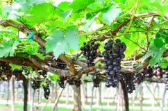 Ναυπηγείο κρασιού στοκ εικόνες με δικαίωμα ελεύθερης χρήσης