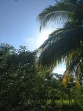 Ναυπηγείο Carib στοκ εικόνα με δικαίωμα ελεύθερης χρήσης
