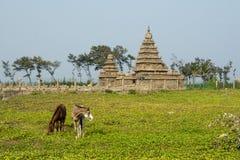 Ναός ακτών Mahabalipuram, Ινδία Στοκ Φωτογραφία