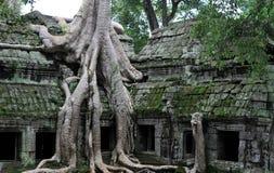 ναός ζουγκλών prohm TA angkor Στοκ Εικόνα