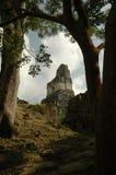 ναός ιαγουάρων Στοκ φωτογραφία με δικαίωμα ελεύθερης χρήσης