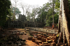 Ναός καταστροφών TA Prohm, Καμπότζη Στοκ φωτογραφία με δικαίωμα ελεύθερης χρήσης