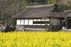 ναός λουλουδιών κίτρινο& στοκ φωτογραφία με δικαίωμα ελεύθερης χρήσης