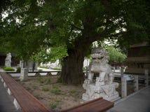 Ναός πέντε-παγοδών, Πεκίνο, Κίνα Στοκ εικόνα με δικαίωμα ελεύθερης χρήσης