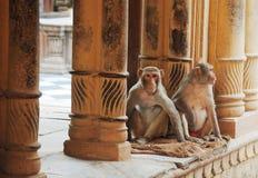 ναός πιθήκων στοκ φωτογραφίες