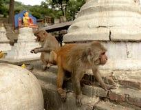 Ναός πιθήκων Swayambhunath, Κατμαντού, Νεπάλ Στοκ Φωτογραφία