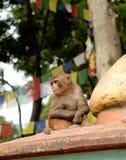 Ναός πιθήκων Swayambhunath, Κατμαντού, Νεπάλ Στοκ εικόνες με δικαίωμα ελεύθερης χρήσης