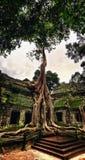 Ναός σε Ankor Wat Στοκ Φωτογραφίες